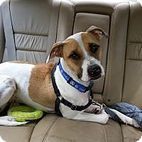 Adopt A Pet :: Neko - Chicago, IL
