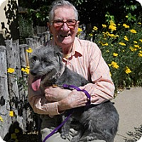 Adopt A Pet :: Liesel - Santa Fe, NM