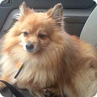 Adopt A Pet :: Ozzie - Smyrna, GA