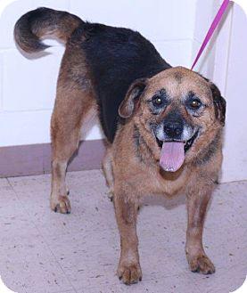 Shepherd (Unknown Type) Mix Dog for adoption in McDonough, Georgia - Iris