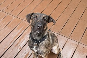 German Shepherd Dog Mix Dog for adoption in Chicago, Illinois - Poochie