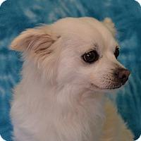 Adopt A Pet :: King - Eureka, CA