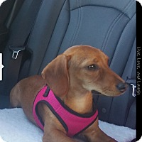 Adopt A Pet :: Coco 2 (COURTESY POST) - Baltimore, MD