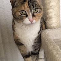 Adopt A Pet :: Rosalee - Prescott, AZ