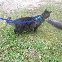 Adopt A Pet :: Liz - Parkton, NC