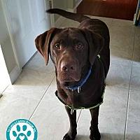 Adopt A Pet :: Jax - Kimberton, PA