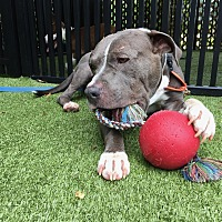Adopt A Pet :: SPIKE - Okatie, SC