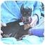 Photo 4 - Miniature Pinscher Puppy for adoption in Vista, California - Zito
