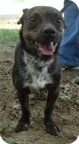 Dachshund Mix Dog for adoption in Weatherford, Texas - Taco