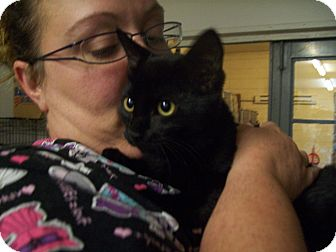 Domestic Shorthair Cat for adoption in Walnut, Iowa - Puma