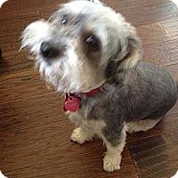 Adopt A Pet :: Rocky 2 - Kingwood, TX