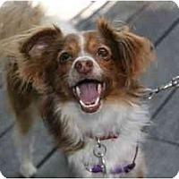 Adopt A Pet :: Jamey - San Diego County, CA
