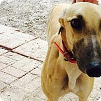 Adopt A Pet :: Lucy - Pearl River, LA