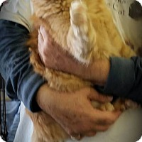 Adopt A Pet :: Garfield - Fairborn, OH