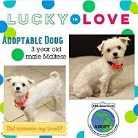 Adopt A Pet :: Doug - Troy, MI