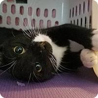 Adopt A Pet :: Ethel - Fayette City, PA