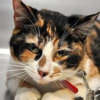 Adopt A Pet :: Jaime - Fort Leavenworth, KS