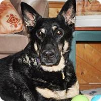 Adopt A Pet :: Luke - Greeley, CO