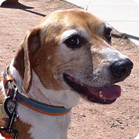 Adopt A Pet :: Bonnie - Tucson, AZ