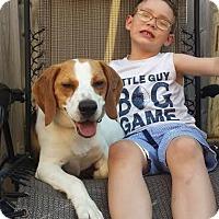 Adopt A Pet :: Memphis - Toronto, ON