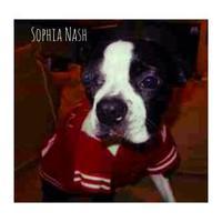Adopt A Pet :: HOSPICE Sophia Nash - Greensboro, NC