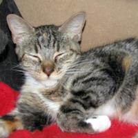 Adopt A Pet :: Sadie - Las Cruces, NM