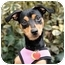 Photo 2 - Manchester Terrier Dog for adoption in Long Beach, New York - Roxy