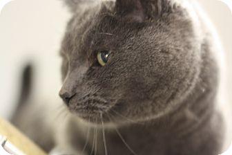 Domestic Shorthair Cat for adoption in Lloydminster, Alberta - Trix