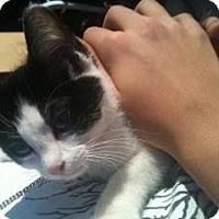 Adopt A Pet :: Cali - justin, TX