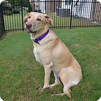 Adopt A Pet :: Ally - Cumming, GA