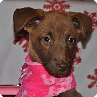 Adopt A Pet :: Lina - Tumwater, WA