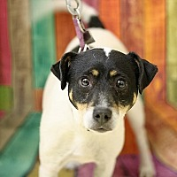 Beagle/Coonhound Mix Dog for adoption in Lyles, Tennessee - Freckles