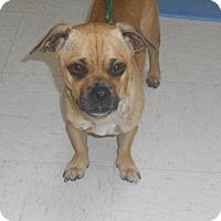 Adopt A Pet :: Tito - Lockhart, TX