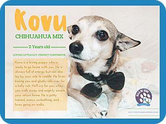 Chihuahua Mix Dog for adoption in Monrovia, California - Kovu