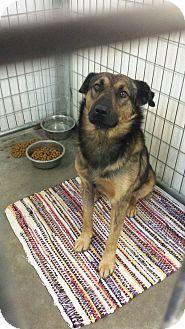 Shepherd (Unknown Type) Mix Dog for adoption in Sauk Rapids, Minnesota - Alpine