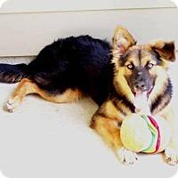 Adopt A Pet :: Tippy - Lafayette, LA