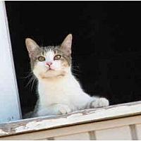 Adopt A Pet :: Lily - Maxwelton, WV