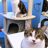 Adopt A Pet :: Belle - Newtown, CT