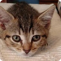 Adopt A Pet :: .Joey - Baltimore, MD