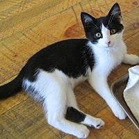 Adopt A Pet :: Orette - Buhl, ID