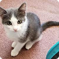 Adopt A Pet :: Pearl - Battle Ground, WA