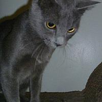 Adopt A Pet :: Emily - Hamburg, NY