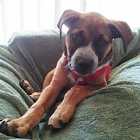 Adopt A Pet :: Pablo aka Bobby - Polson, MT