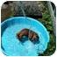Photo 4 - Dachshund Dog for adoption in Killingworth, Connecticut - Oscar