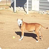 Adopt A Pet :: Hoss - Southampton, PA