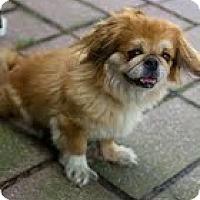 Adopt A Pet :: Julianna - Richmond, VA