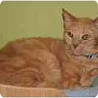 Adopt A Pet :: Adam - Marietta, GA