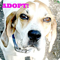 Adopt A Pet :: Anastasia - Leesburg, VA