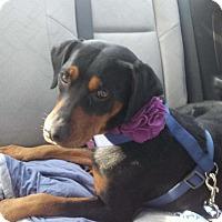 Adopt A Pet :: Perfect Pocahantas - Madison, NJ
