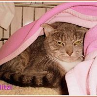 Adopt A Pet :: Mitzi - Berkeley Springs, WV